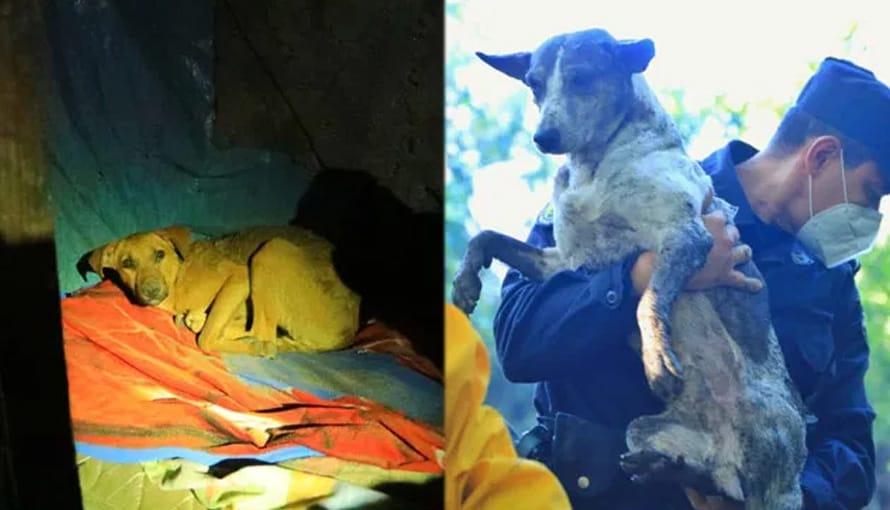 Rescatan con vida a las mascotas de personas soterradas en Nejapa